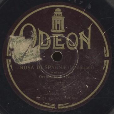 Rosa di Spagna