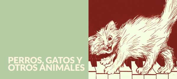 Cani, gatti e altri animali